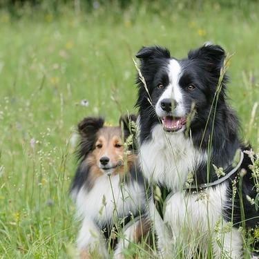 かわいい「もふもふ」の犬種は?大型/中型/小型毎にご紹介