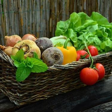 犬が食べていい野菜・フルーツまとめ!犬に野菜・フルーツを与える時に注意すべき事は?