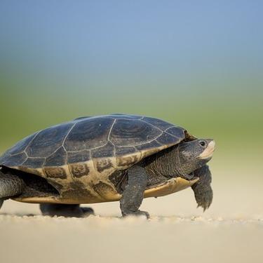 亀は本当に長生きなのか?亀の平均寿命や寿命が長い理由について