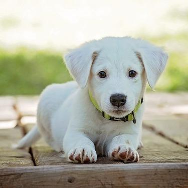 犬のマウンティングをする意味や理由は?やめさせる方法をご紹介!