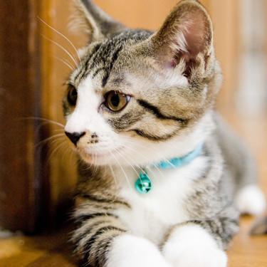 猫に首輪はする?飼い猫にも必要なの?メリット・デメリットを比較して判断しよう!