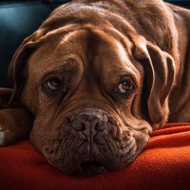 犬の年齢を人間の年齢に換算すると何歳?早見表でまとめ!