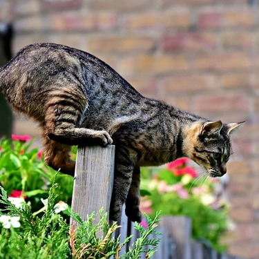 【エリア別】猫の脱走防止のための対策方法をご紹介!ベランダ/玄関/窓
