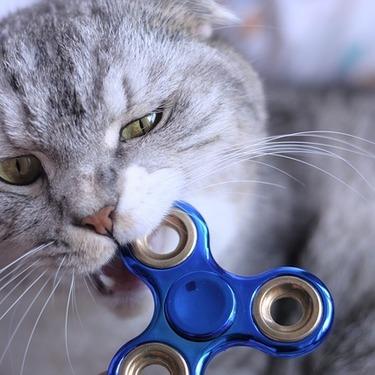 猫が甘噛みする意味とは?本気噛みとの違いやしつけ・対策方法をご紹介!
