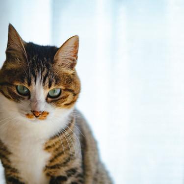 猫の頭突きをする意味とは?頭突きされた後の対応はどうしたらいいのか