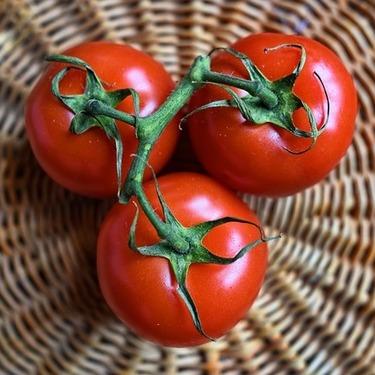 犬にトマトを与えて大丈夫なのか?トマトの効能や与える際の注意点まとめ!