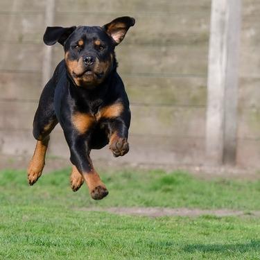 うちの犬は外飼いすべき?それとも室内飼い?外飼いのメリット・デメリットまとめ!