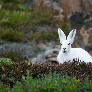 ウサギの年齢を人間の年齢に換算すると何歳?ウサギのの年齢早見表!