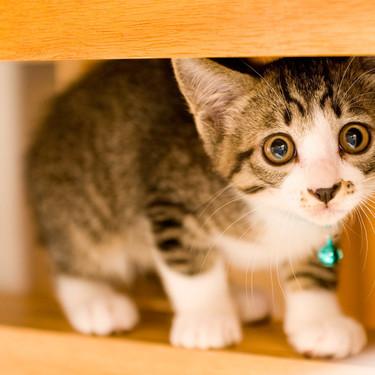 猫の名前どうする?人気の猫の名前ランキング!和風・海外で人気の名前は?