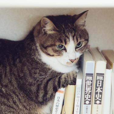 三味線の材料に猫の皮が使われているのは本当?なぜなのか?