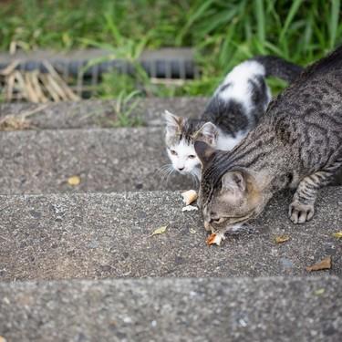 猫にハッカ油は危険なの?野良猫よけにはハッカ油は効果的?