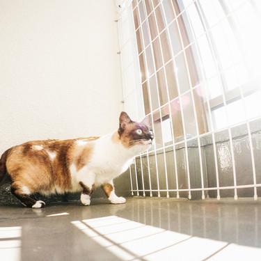 猫の行動範囲や移動距離を解説!脱走した猫が帰ってくる確率はどのくらい?