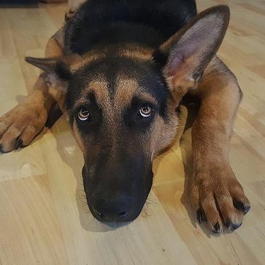 犬に噛まれたら病院を受診すべき?応急処置の方法もご紹介!