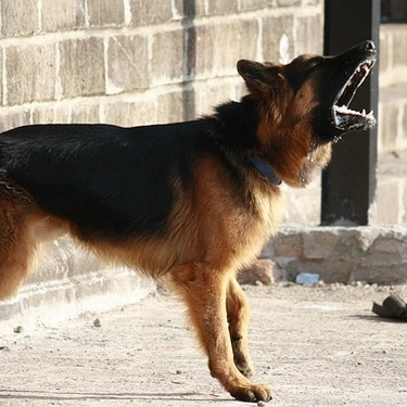 ワンワン!犬の鳴き声は英語だと何と表現する?他の鳴き方も併せてご紹介!