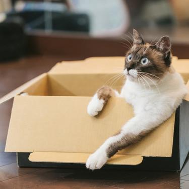 謎の組織NNN(ねこねこネットワーク)とは何?謎の猫派遣組織の実態は?
