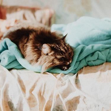 猫が毛布や布団をもみもみ揉む理由や意味とは?