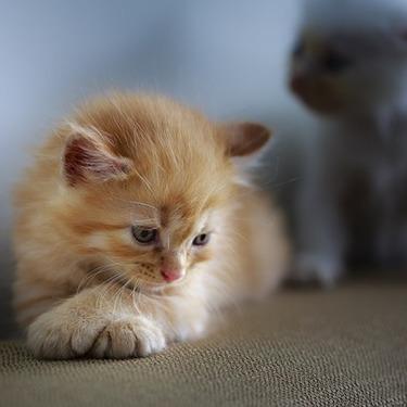 猫が水を飲まないのは病気?猫に水を飲ませる方法10選!