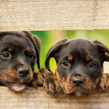 犬の数え方は一頭?一匹?匹と頭の違いをご紹介!