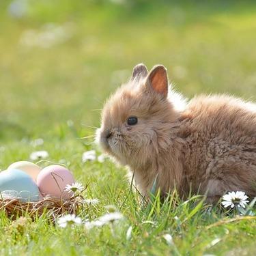 イースターとは何?なぜうさぎと卵が出てくるのか?