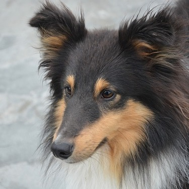 犬のマズルコントロールって何?その意味や効果とやり方についてご紹介!
