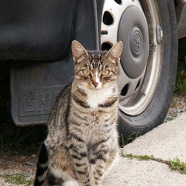 猫はどうやってエンジンルームの中に入るのか?対策方法をご紹介!