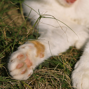 【犬と猫の足跡のイラスト】犬と猫の足跡の違いをご紹介!