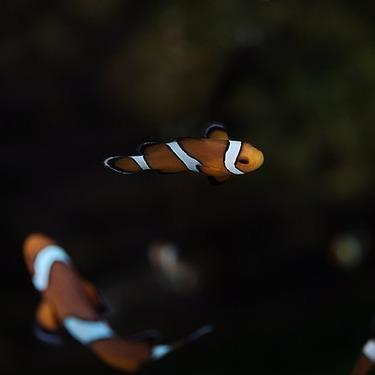 おすすめの熱帯魚用ヒーターの種類5選!ヒーターの選び方の目安とは?