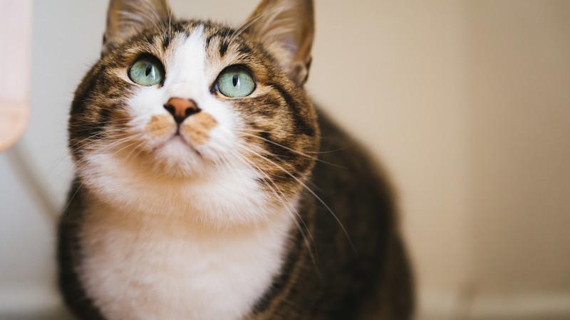 またたびとは何?猫にまたたびを与えるとどういう効果があるのかご紹介!