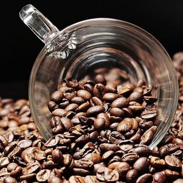 犬にコーヒーを与えても大丈夫?カフェイン中毒に注意が必要