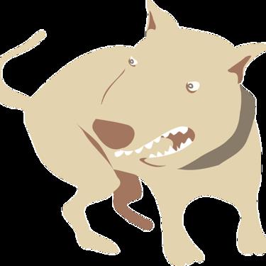 噛み付くときの犬の気持ちとは?噛み付く犬への対処法をご紹介!