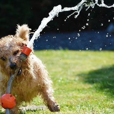 犬の暑さ対策4選とおすすめの犬の暑さ対策グッズをご紹介!