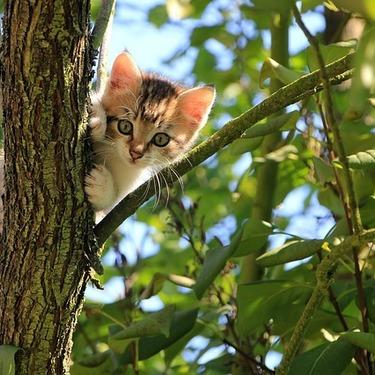 日本にあるおすすめの猫島8選をご紹介!