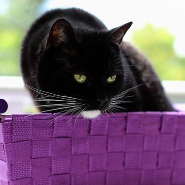 セーラームーンに登場する猫の名前は?ぬいぐるみもご紹介
