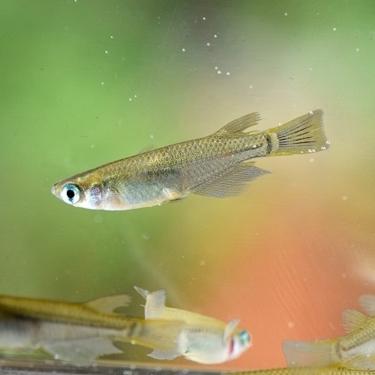 飼いやすい淡水魚おすすめランキングTOP10をご紹介!