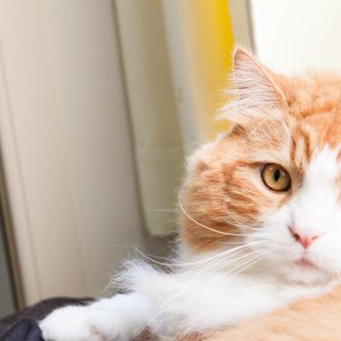 猫アレルギーを治すための対処法はある?猫アレルギーの対策についてまとめ!