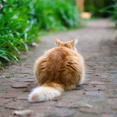 猫が帰ってこない原因・理由は?戻ってこない猫の探し方を紹介