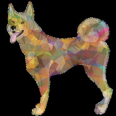 山陰柴犬とはどんな犬?普通の柴犬とは特徴が違うのかご紹介!