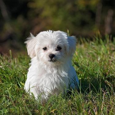 愛犬のカーミングシグナルに気付いてますか?カーミングシグナルまとめ!