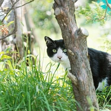 世界一長生きした猫の年齢と種類は?ギネスに載った長寿猫を紹介!