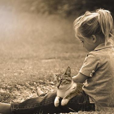 猫の人間換算の年齢早見表を紹介!あなたの猫は何歳?