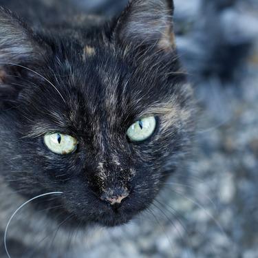 あなたの猫は何歳?猫の年齢の見分け方をご紹介!