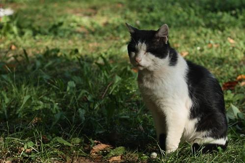 ぶち猫の性格・特徴とかわいい画像をご紹介!