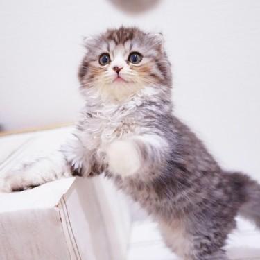 猫じゃらしを英語で何と言う?猫じゃらしを使った例文を紹介