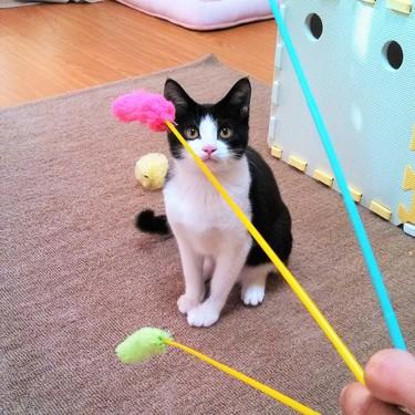 猫が夢中になる猫じゃらしの扱い方のコツをご紹介!