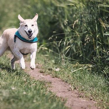 【これで大丈夫】犬が穴掘りする理由と、穴掘り対策をご紹介!