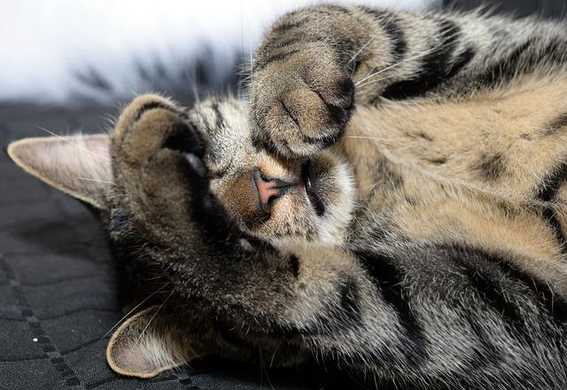 猫の肉球や猫の手は英語で何と言う?例文を紹介!