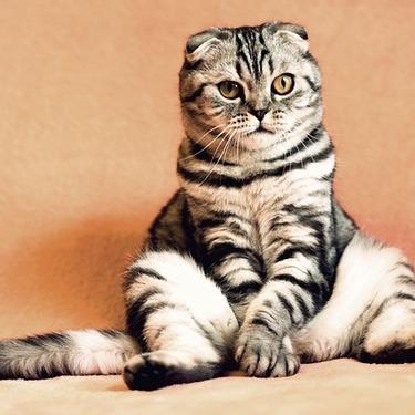 猫砂と猫のうんちの捨て方を紹介!猫砂の種類で異なる点に注意