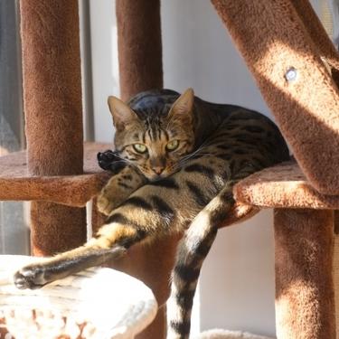【猫の爪とぎを防止】猫の爪とぎ対策5選をご紹介!
