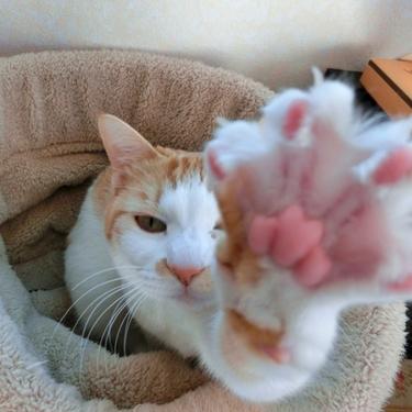 猫の爪とぎのしつけ方法を紹介!しつけで壁・ソファを守る