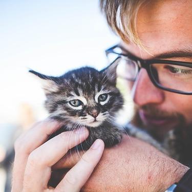 【動画あり】猫なで声とはどんな声?出し方・出す時の心理を紹介!